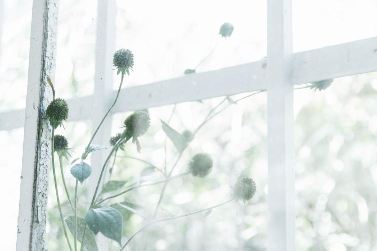 クラシックな窓枠の画像