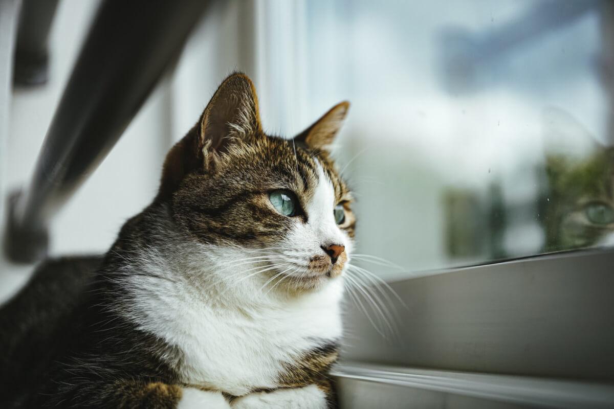 二重窓の内窓でくつろぐ猫の画像